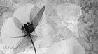 Abstrakt Blume