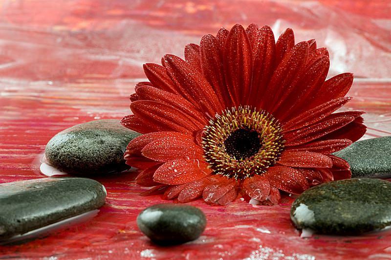 Rote Tapete Mit Blumenmuster : Bildheizung Nomic-Dekor 700 Watt, 799,00 ? imowell